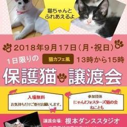 1日限定 猫カフェ風 保護猫譲渡会