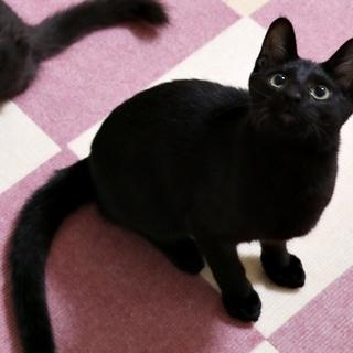 人懐こい抱っこ好きな黒猫くん