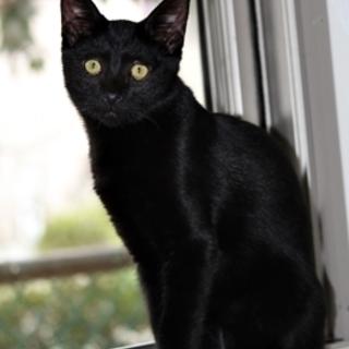 人が大好き、元気な懐こい黒猫くん