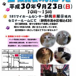 静岡市清水区で保護猫譲渡会です