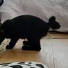 4ヶ月! 尻尾がハートの絹ちゃん サムネイル3
