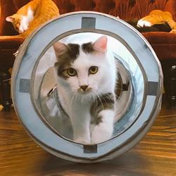 【猫初心者歓迎】猫を飼うための第一歩