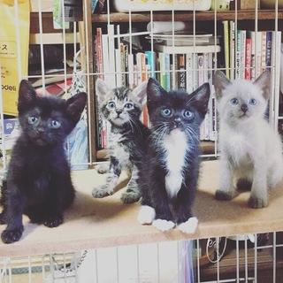 元気でかわいい4兄妹(=^x^=)