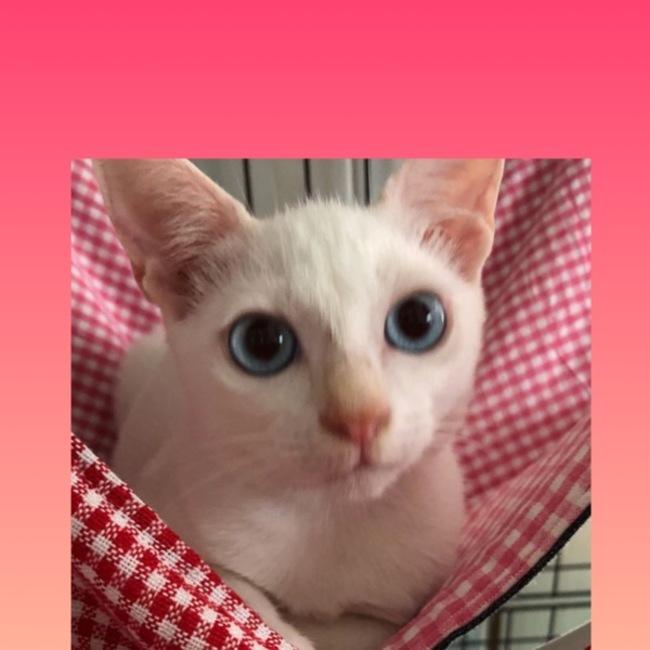 まりりんのおうちのカバー写真
