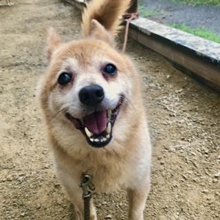 東日本大震災被災犬 ヘレン 里親募集です。
