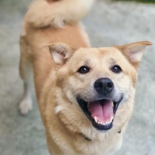 東日本大震災被災犬2世 ブリッジです。