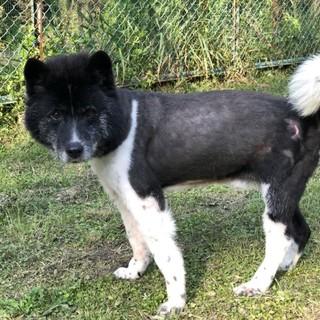 東日本大震災被災犬 チビです。