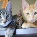 野良猫4兄弟(オス3メス1)の里親募集