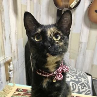 まんまるお目々、美猫のサザビー❣️