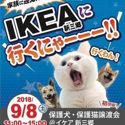 保護犬・保護猫譲渡会 @IKEA新三郷