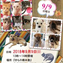 保護っこ犬猫譲渡会★倉敷