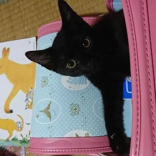 美しく 甘えん坊の黒猫 キュートちゃん