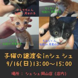 子猫の譲渡会 in シュシュ岡山店