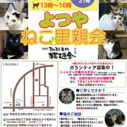 9月14日(金) 地域猫から社会猫へ FIPフリー 四谷猫廼舎 ナイター里親会(ボランティア募集中) サムネイル1
