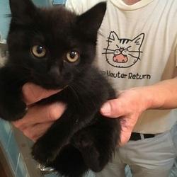 9月14日(金) 地域猫から社会猫へ FIPフリー 四谷猫廼舎 ナイター里親会(ボランティア募集中) サムネイル3