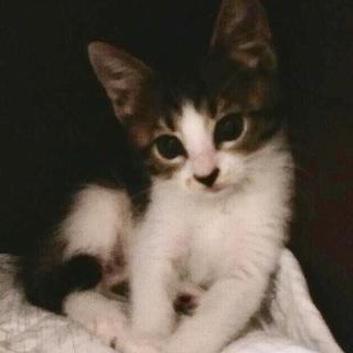 モデルタイプの美猫、フジコちゃん❣️
