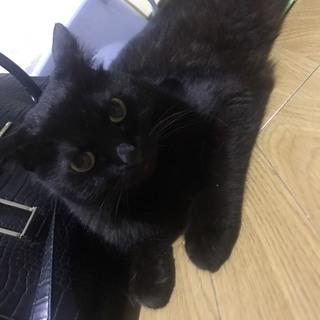 【今年の12月まで】黒猫12歳ちぃちゃん