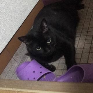 【今年の12月まで】黒猫12歳さいくん