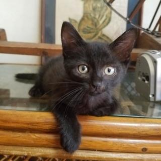 甘えたな黒猫さんメス