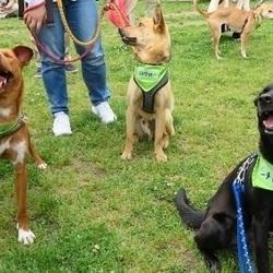 犬とねこの里親募集会【高槻・食の文化祭】 サムネイル3