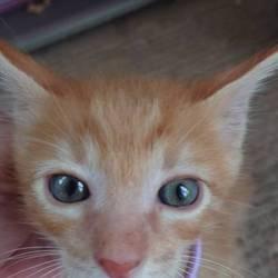 猫の譲渡会@いしじま動物病院待合室 サムネイル3
