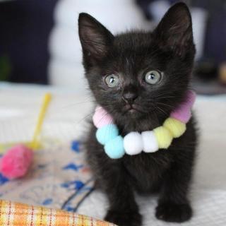 小さな真っ黒くろすけの可愛い風神です