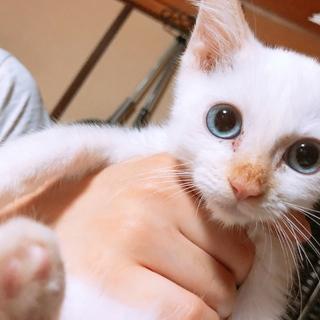 人間大好き!ブルーの瞳の綺麗な男の子