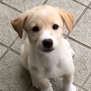 【保健所引き出し】かわいい子犬です❗️