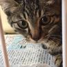 5月生まれ♂兄弟猫 サムネイル3