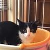 5月生まれ♂兄弟猫 サムネイル4