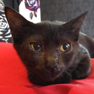 ☆人気の凛々しい黒猫やまとくん☆