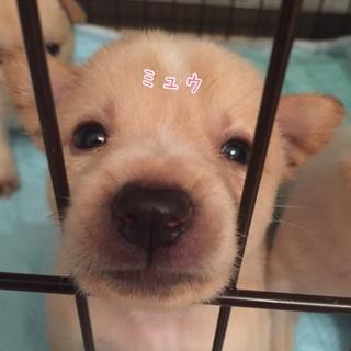 ミュウちゃん♡ 1ヶ月