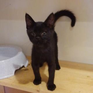 抱っこ大好き甘えん坊の黒猫くん