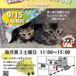 第70回保護猫たちの幸せ探し会