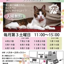 第71回保護猫たちの幸せ探し会
