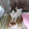 白黒 子猫 コボちゃん サムネイル2