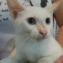 京くん 白猫しっぽの茶縞がチャームポイント