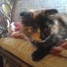 生後約3ヶ月の子猫の里親を募集しています。