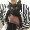 黒猫メス、キジトラオス 兄妹