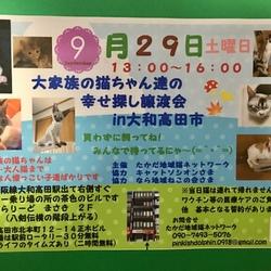 大家族の猫ちゃん達の幸せ探し譲渡会in大和高田市