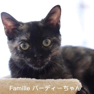 サビ子猫 バーディーちゃん 里親募集中!