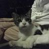 人懐っこい美猫ちゃん、無事保護しました!