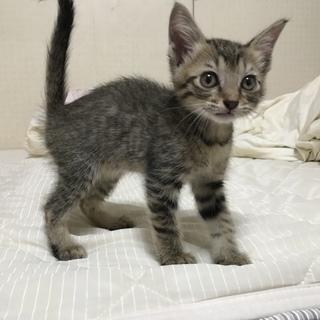 生後3〜4週間の可愛い子猫ちゃん