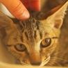 控えめなキジトラの女の子 サムネイル2