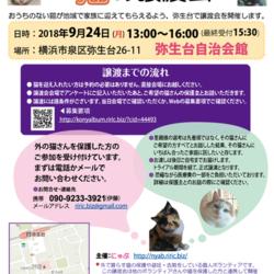 横浜市泉区でねこの譲渡会第9回 9月24日(月)