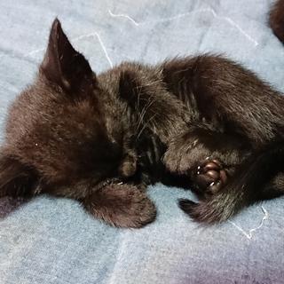 交渉中☆黒猫の赤ちゃん(みどり)