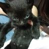 交渉中☆黒猫の赤ちゃん(みどり) サムネイル2