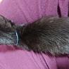 黒猫の赤ちゃん(あお) サムネイル2