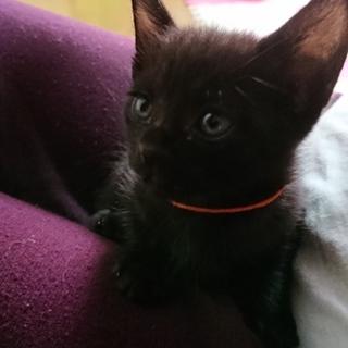 黒猫の赤ちゃん(オレンジ)