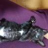 黒猫の赤ちゃん(オレンジ) サムネイル3